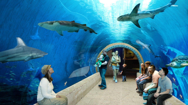 shark tank concrete pour   living pla  aquarium   w w